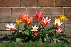 clinica geriatrica em sp flores