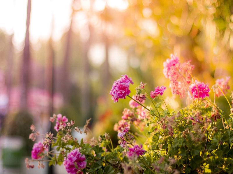 Flores e terceira idade